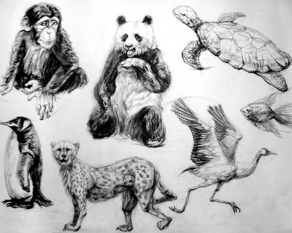 Sketch Tiere